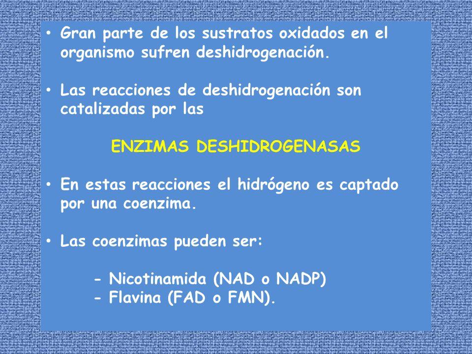 Gran parte de los sustratos oxidados en el organismo sufren deshidrogenación. Las reacciones de deshidrogenación son catalizadas por las ENZIMAS DESHI