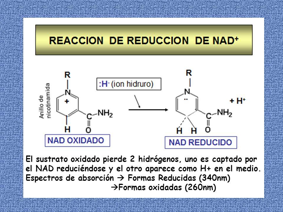 El sustrato oxidado pierde 2 hidrógenos, uno es captado por el NAD reduciéndose y el otro aparece como H+ en el medio. Espectros de absorción Formas R