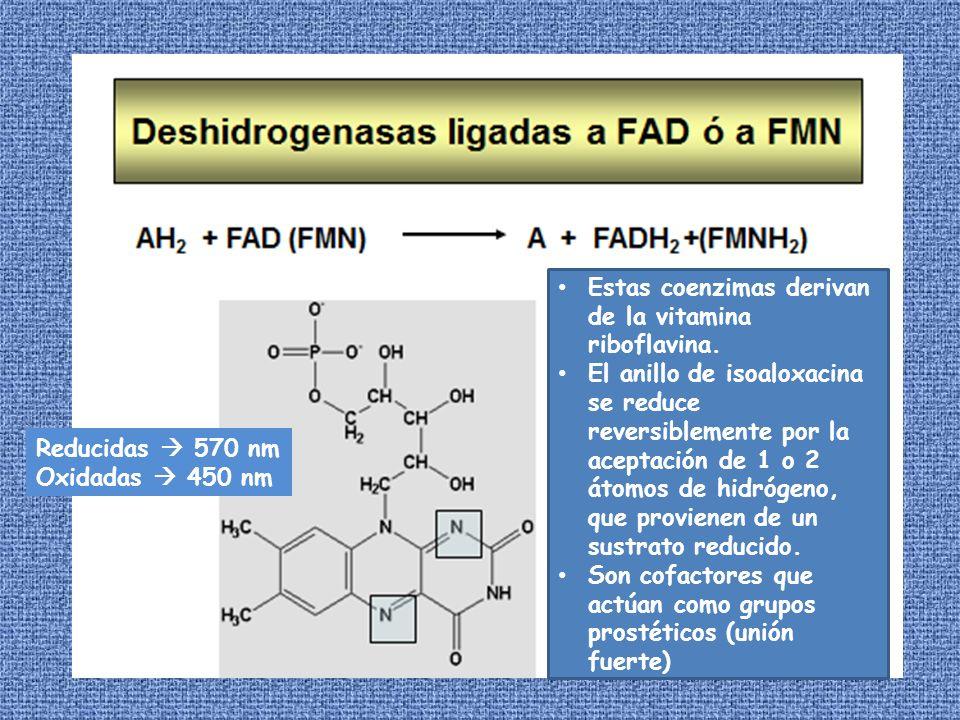 Estas coenzimas derivan de la vitamina riboflavina. El anillo de isoaloxacina se reduce reversiblemente por la aceptación de 1 o 2 átomos de hidrógeno