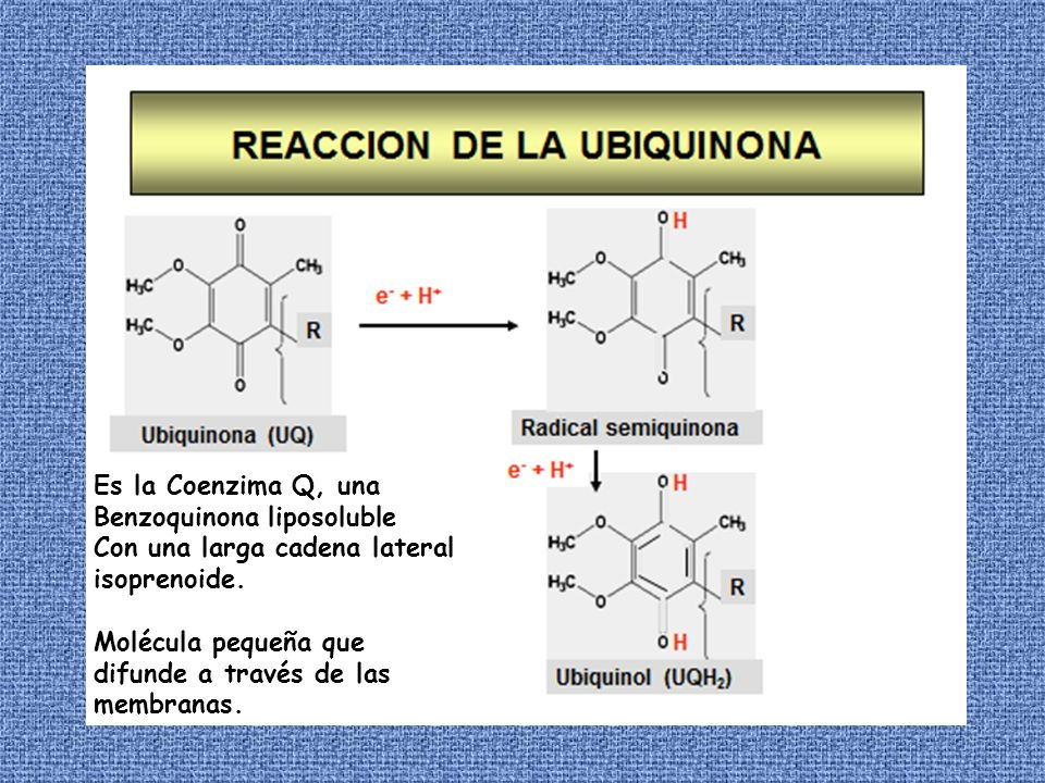 Es la Coenzima Q, una Benzoquinona liposoluble Con una larga cadena lateral isoprenoide. Molécula pequeña que difunde a través de las membranas.