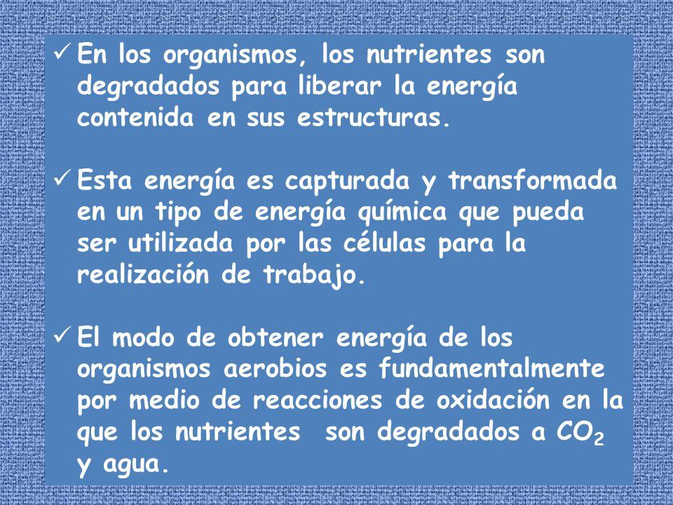 En los organismos, los nutrientes son degradados para liberar la energía contenida en sus estructuras. Esta energía es capturada y transformada en un