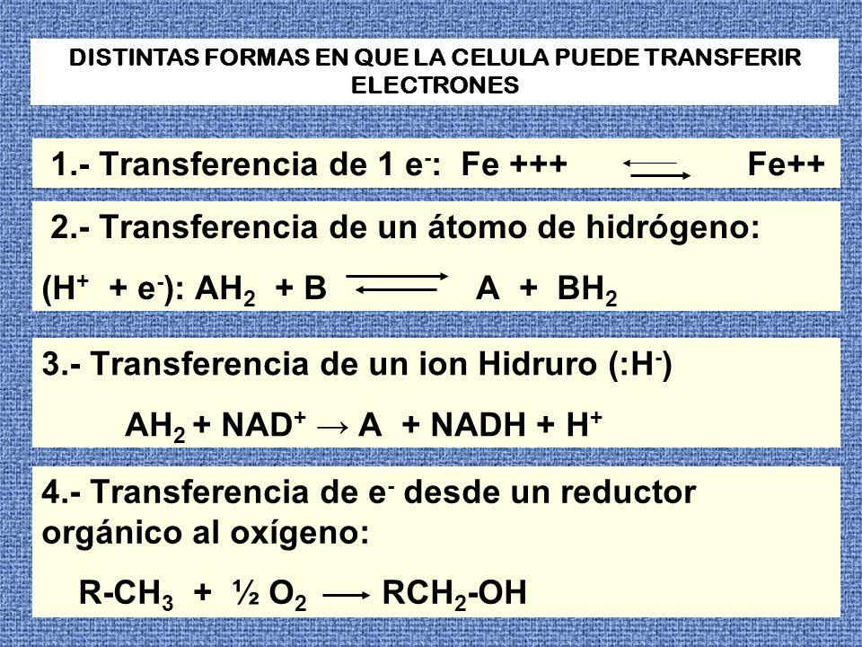 DISTINTAS FORMAS EN QUE LA CELULA PUEDE TRANSFERIR ELECTRONES 1.- Transferencia de 1 e - : Fe +++ Fe++ 2.- Transferencia de un átomo de hidrógeno: (H