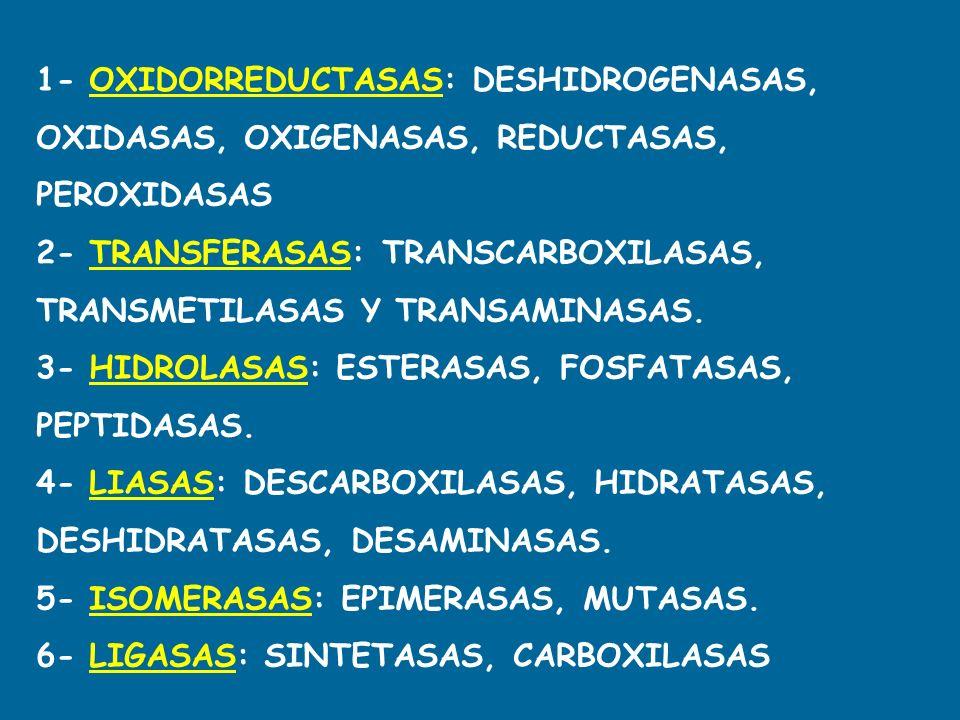 1- OXIDORREDUCTASAS: DESHIDROGENASAS, OXIDASAS, OXIGENASAS, REDUCTASAS, PEROXIDASAS 2- TRANSFERASAS: TRANSCARBOXILASAS, TRANSMETILASAS Y TRANSAMINASAS