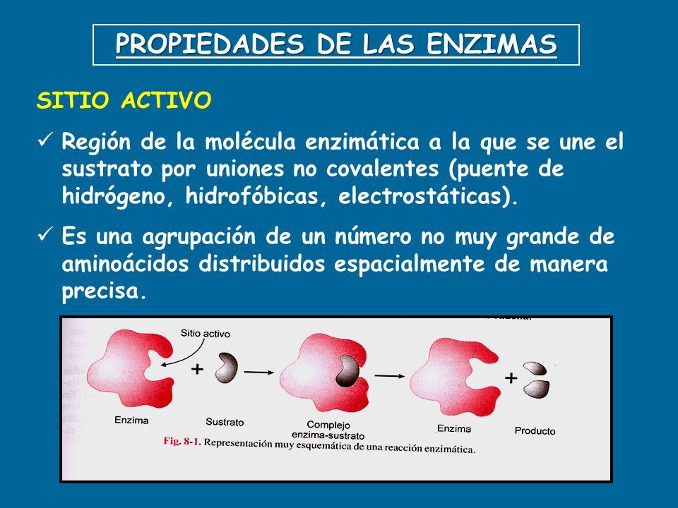 PROPIEDADES DE LAS ENZIMAS SITIO ACTIVO Región de la molécula enzimática a la que se une el sustrato por uniones no covalentes (puente de hidrógeno, h