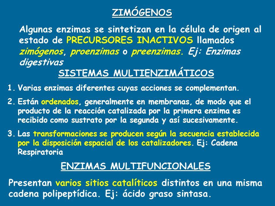 ZIMÓGENOS Algunas enzimas se sintetizan en la célula de origen al estado de PRECURSORES INACTIVOS llamados zimógenos, proenzimas o preenzimas. Ej: Enz