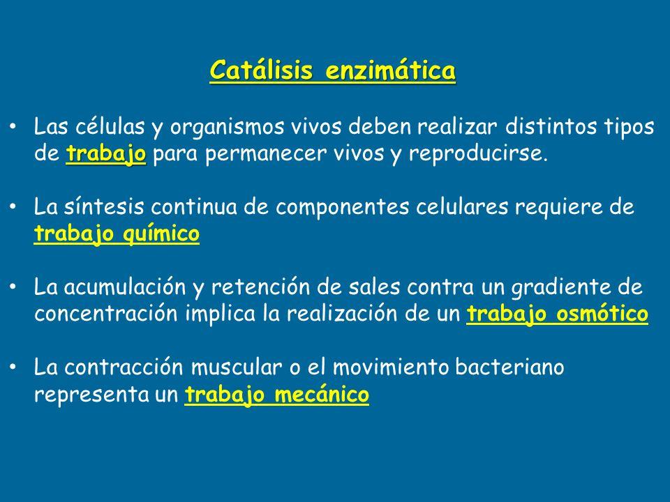 Catálisis enzimática trabajo Las células y organismos vivos deben realizar distintos tipos de trabajo para permanecer vivos y reproducirse. La síntesi
