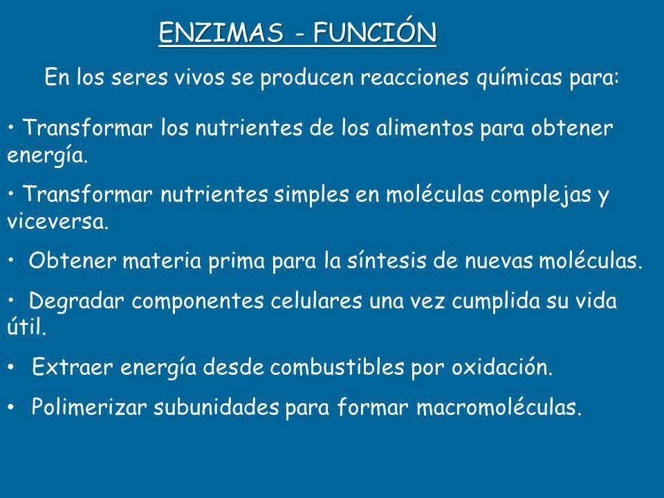 ENZIMAS - FUNCIÓN En los seres vivos se producen reacciones químicas para: Transformar los nutrientes de los alimentos para obtener energía. Transform