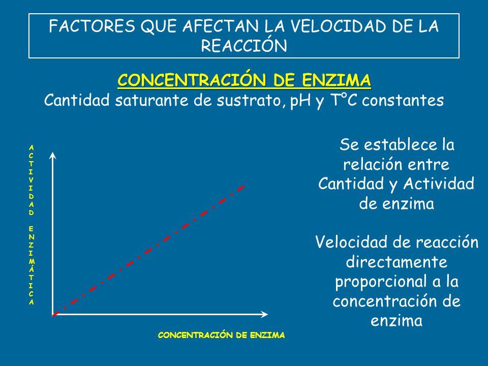 FACTORES QUE AFECTAN LA VELOCIDAD DE LA REACCIÓN CONCENTRACIÓN DE ENZIMA Cantidad saturante de sustrato, pH y T°C constantes ACTIVIDAD ENZIMÁTICAACTIV