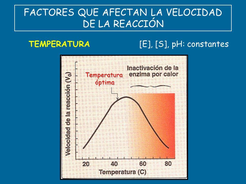 FACTORES QUE AFECTAN LA VELOCIDAD DE LA REACCIÓN TEMPERATURA Temperaturaóptima [E], [S], pH: constantes