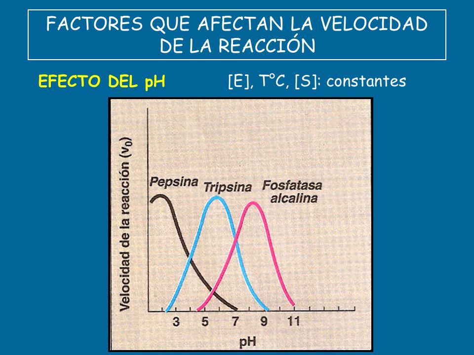 FACTORES QUE AFECTAN LA VELOCIDAD DE LA REACCIÓN EFECTO DEL pH [E], T°C, [S]: constantes