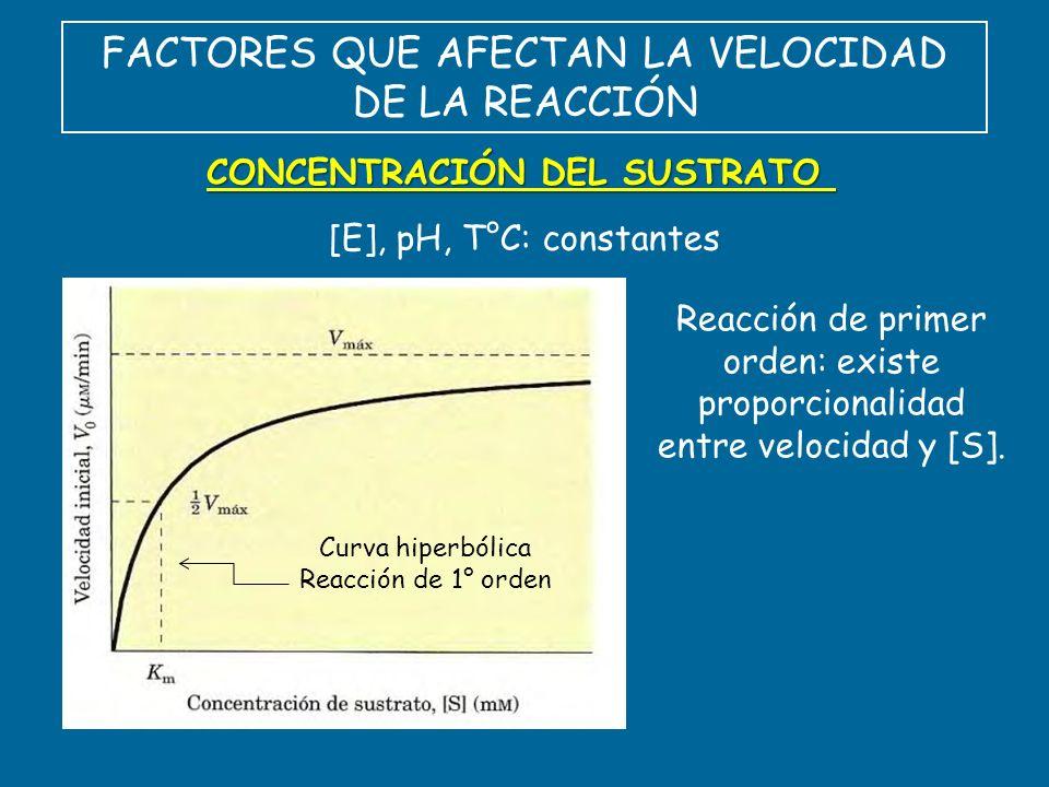 FACTORES QUE AFECTAN LA VELOCIDAD DE LA REACCIÓN CONCENTRACIÓN DEL SUSTRATO [E], pH, T°C: constantes Curva hiperbólica Reacción de 1° orden Reacción d