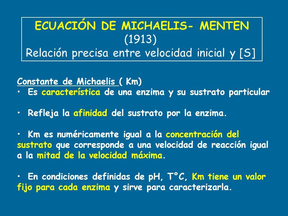 ECUACIÓN DE MICHAELIS- MENTEN (1913) Relación precisa entre velocidad inicial y [S] Constante de Michaelis ( Km) Es característica de una enzima y su