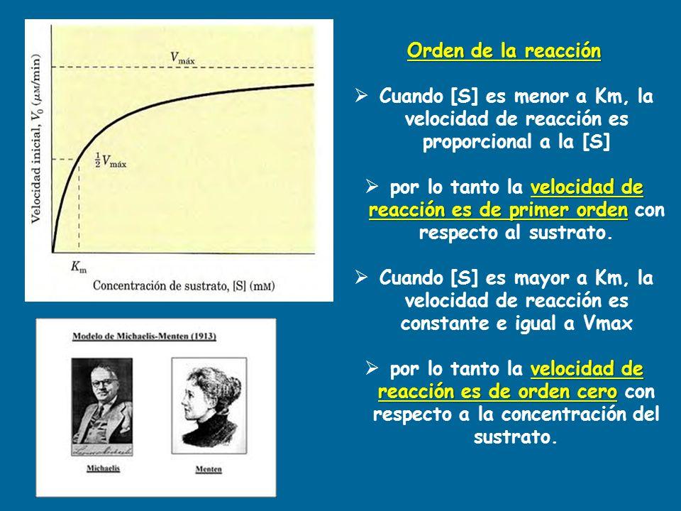 Orden de la reacción Cuando [S] es menor a Km, la velocidad de reacción es proporcional a la [S] velocidad de reacción es de primer orden por lo tanto