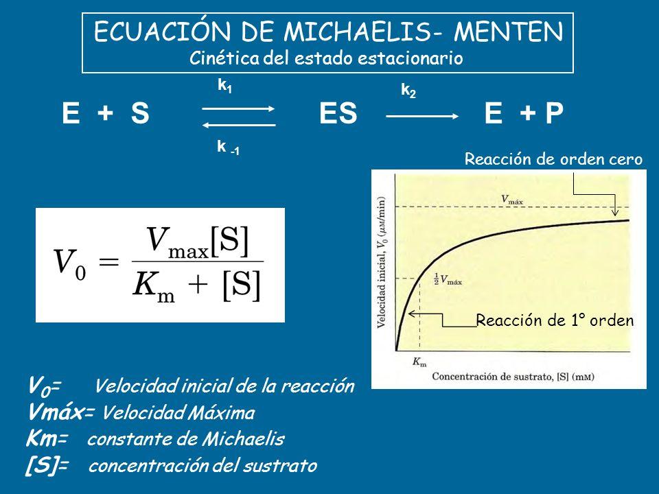 ECUACIÓN DE MICHAELIS- MENTEN Cinética del estado estacionario E + PESE + S k1k1 k -1 k2k2 V 0 = Velocidad inicial de la reacción Vmáx= Velocidad Máxi