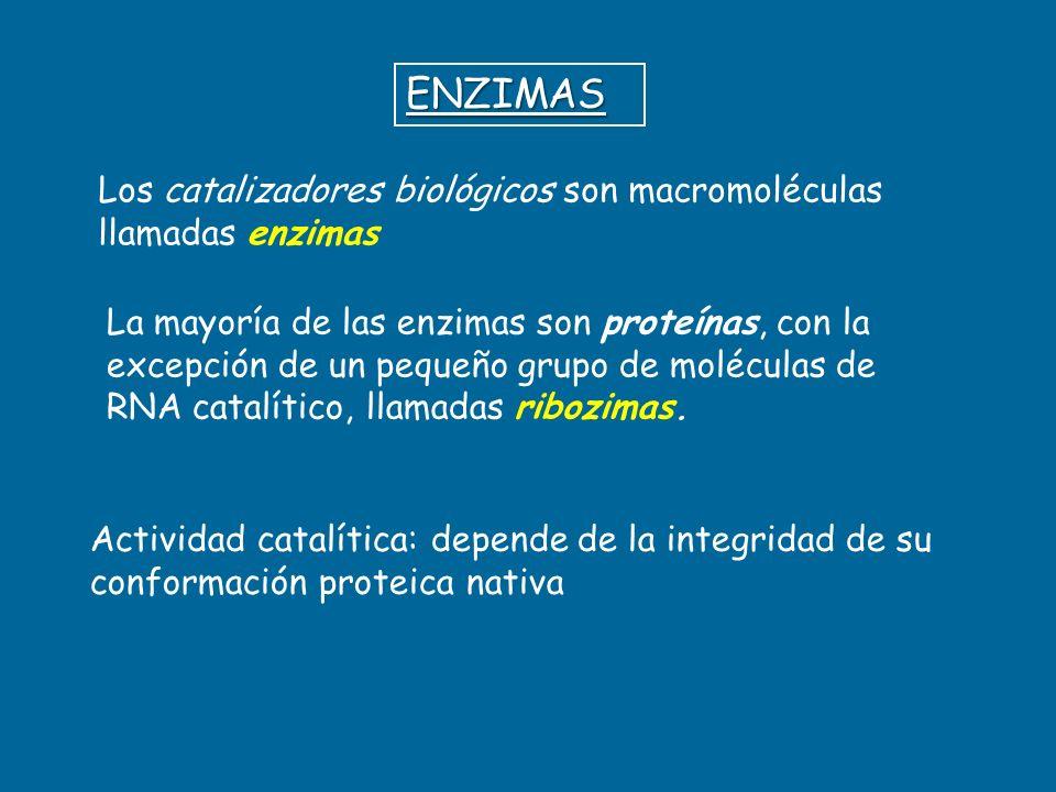 ENZIMAS Los catalizadores biológicos son macromoléculas llamadas enzimas Actividad catalítica: depende de la integridad de su conformación proteica na