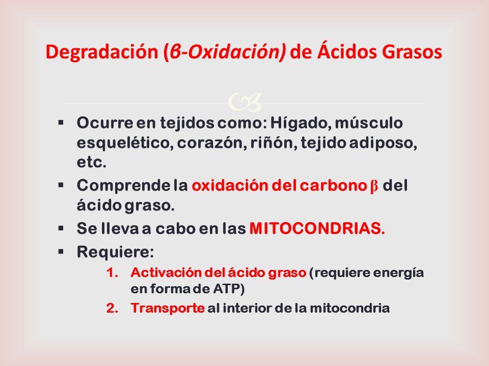 7 1) Activación del ácido graso Ocurre en el Citosol.