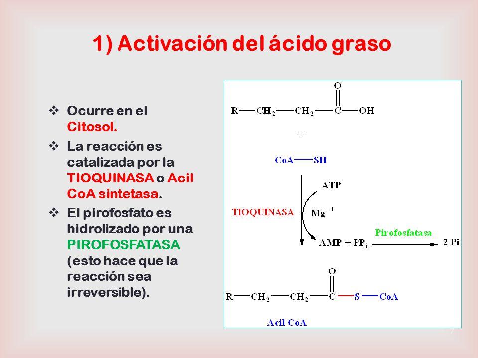 Acil-CoA Acil-Carnitina -oxidación