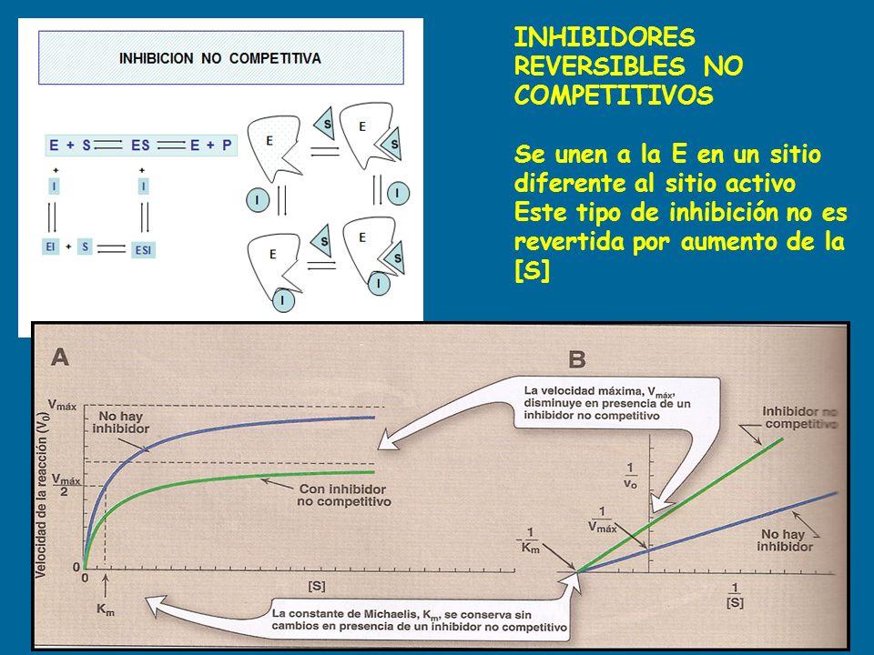 INHIBIDORES REVERSIBLES NO COMPETITIVOS Se unen a la E en un sitio diferente al sitio activo Este tipo de inhibición no es revertida por aumento de la