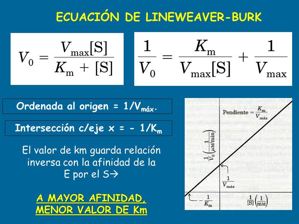 ECUACIÓN DE LINEWEAVER-BURK Ordenada al origen = 1/V máx. Intersección c/eje x = - 1/K m El valor de km guarda relación inversa con la afinidad de la