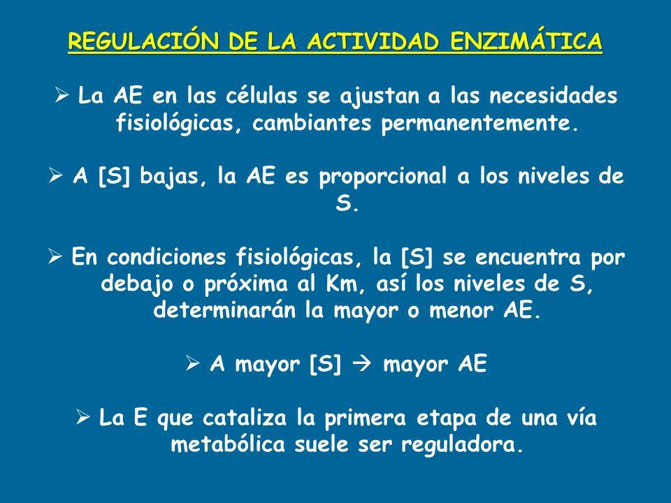 REGULACIÓN DE LA ACTIVIDAD ENZIMÁTICA La AE en las células se ajustan a las necesidades fisiológicas, cambiantes permanentemente. A [S] bajas, la AE e