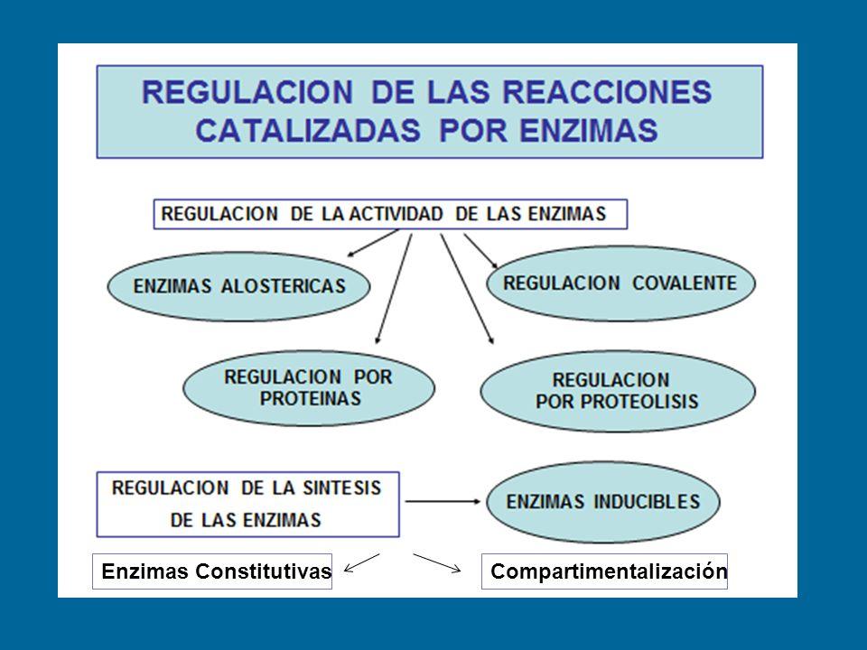 Enzimas ConstitutivasCompartimentalización