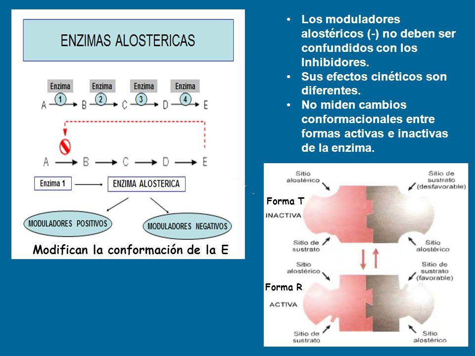 Modifican la conformación de la E Los moduladores alostéricos (-) no deben ser confundidos con los Inhibidores. Sus efectos cinéticos son diferentes.