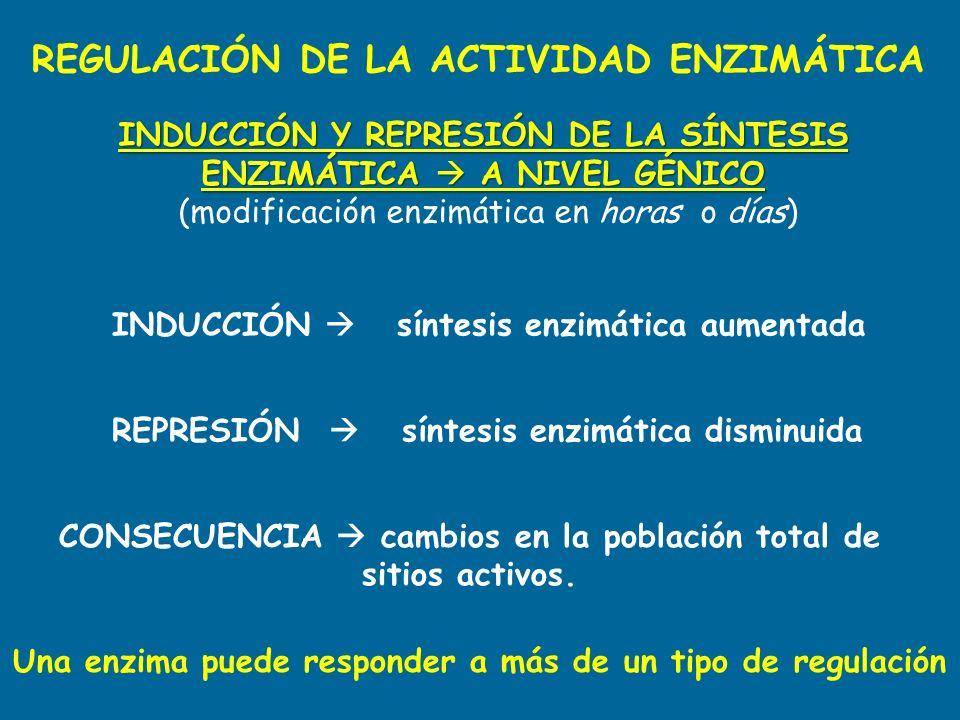 REGULACIÓN DE LA ACTIVIDAD ENZIMÁTICA INDUCCIÓN Y REPRESIÓN DE LA SÍNTESIS ENZIMÁTICA A NIVEL GÉNICO (modificación enzimática en horas o días) INDUCCI