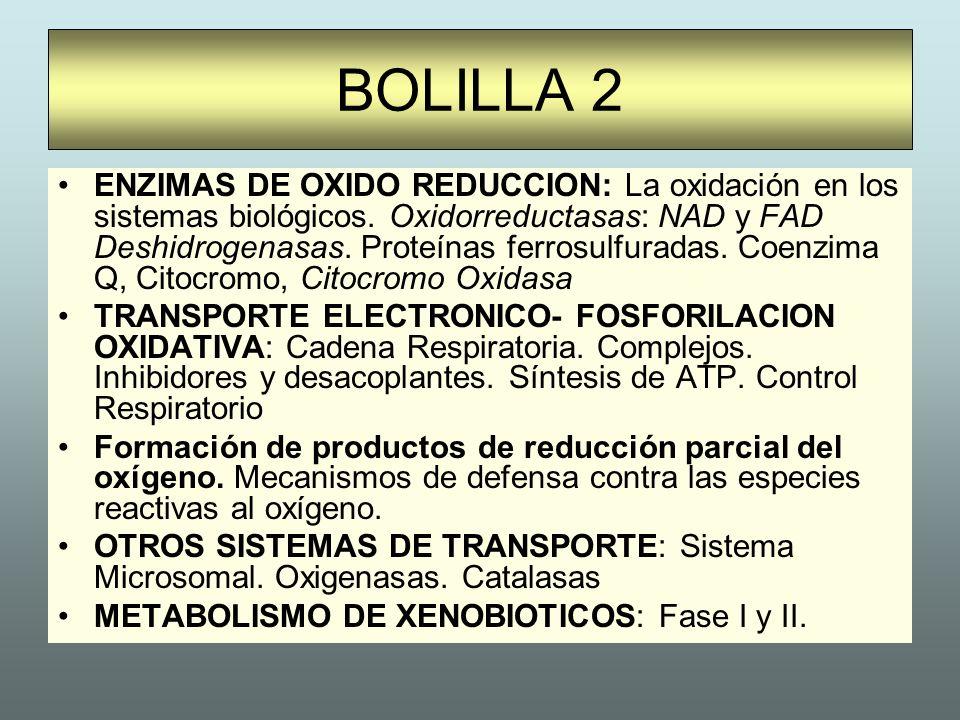 BOLILLA 2 ENZIMAS DE OXIDO REDUCCION: La oxidación en los sistemas biológicos. Oxidorreductasas: NAD y FAD Deshidrogenasas. Proteínas ferrosulfuradas.