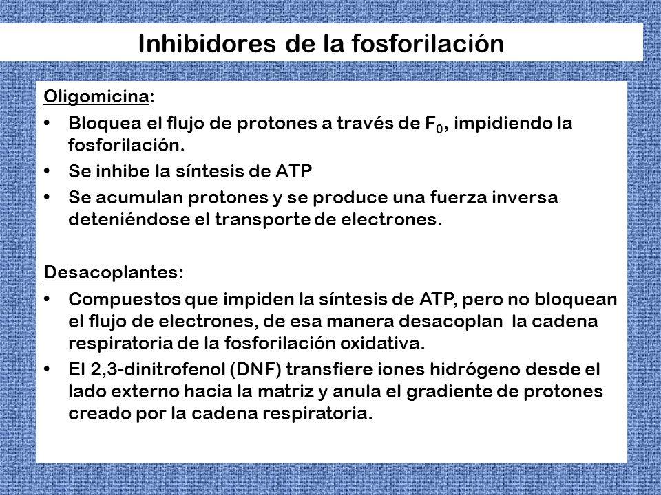 Inhibidores de la fosforilación Oligomicina: Bloquea el flujo de protones a través de F 0, impidiendo la fosforilación. Se inhibe la síntesis de ATP S