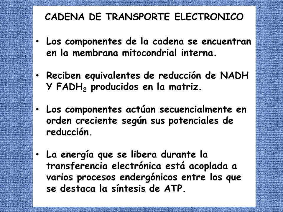 La energía del gradiente de protones se utiliza también para el transporte