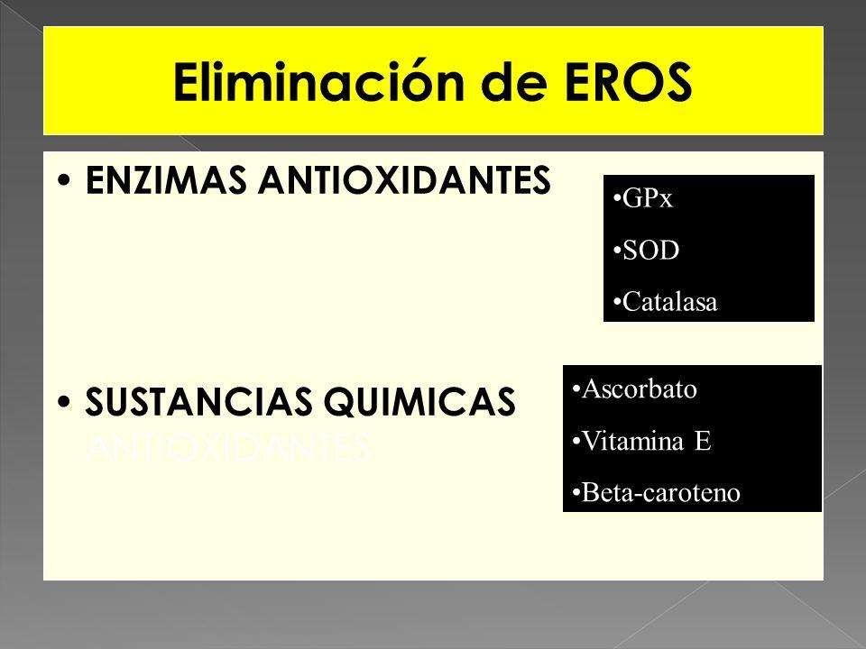 Eliminación de EROS ENZIMAS ANTIOXIDANTES SUSTANCIAS QUIMICAS ANTIOXIDANTES Ascorbato Vitamina E Beta-caroteno GPx SOD Catalasa