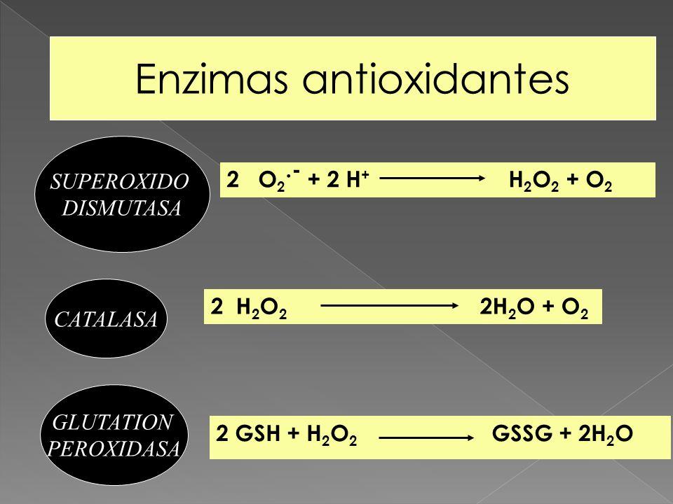 2 O 2.- + 2 H + H 2 O 2 + O 2 Enzimas antioxidantes CATALASA GLUTATION PEROXIDASA 2 H 2 O 2 2H 2 O + O 2 2 GSH + H 2 O 2 GSSG + 2H 2 O SUPEROXIDO DISM