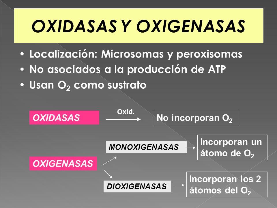 OXIDASAS Y OXIGENASAS Localización: Microsomas y peroxisomas No asociados a la producción de ATP Usan O 2 como sustrato OXIDASAS OXIGENASAS No incorpo
