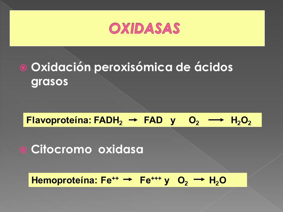 Oxidación peroxisómica de ácidos grasos Citocromo oxidasa Flavoproteína: FADH 2 FAD y O 2 H 2 O 2 Hemoproteína: Fe ++ Fe +++ y O 2 H 2 O