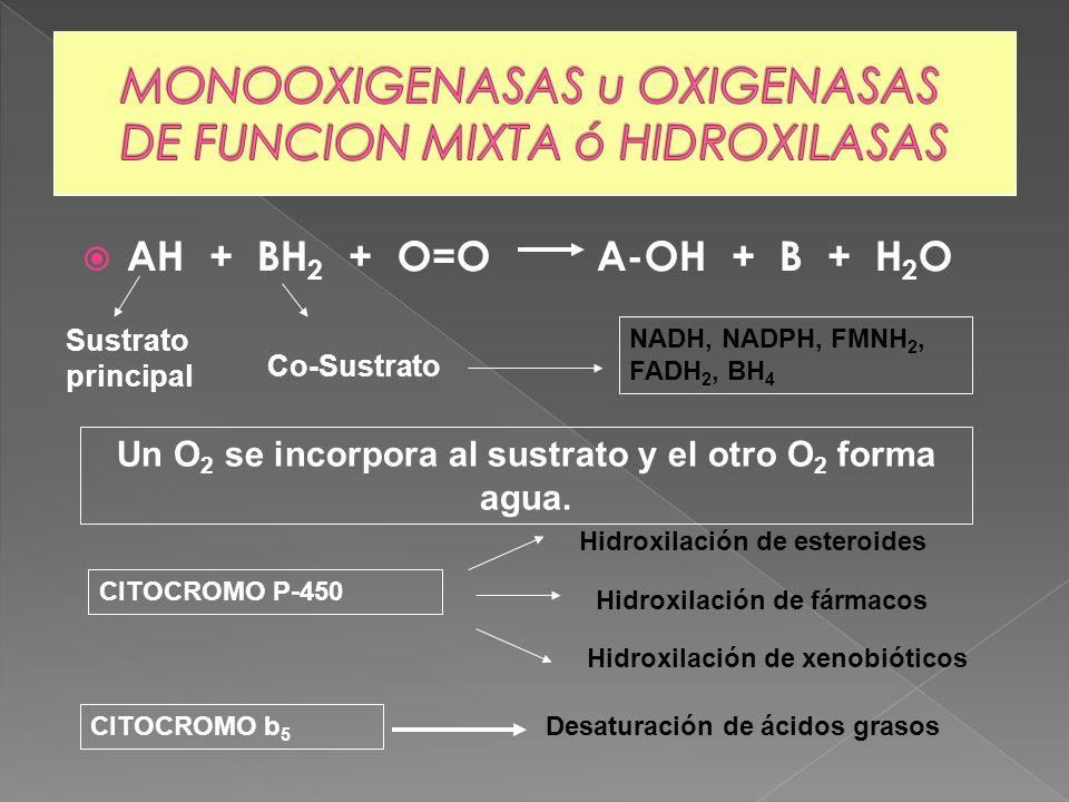 AH + BH 2 + O=O A-OH + B + H 2 O Un O 2 se incorpora al sustrato y el otro O 2 forma agua. Sustrato principal Co-Sustrato NADH, NADPH, FMNH 2, FADH 2,