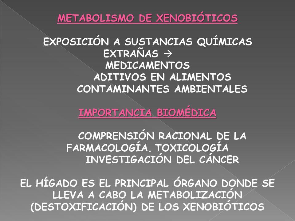 METABOLISMO DE XENOBIÓTICOS EXPOSICIÓN A SUSTANCIAS QUÍMICAS EXTRAÑAS MEDICAMENTOS ADITIVOS EN ALIMENTOS CONTAMINANTES AMBIENTALES IMPORTANCIA BIOMÉDI