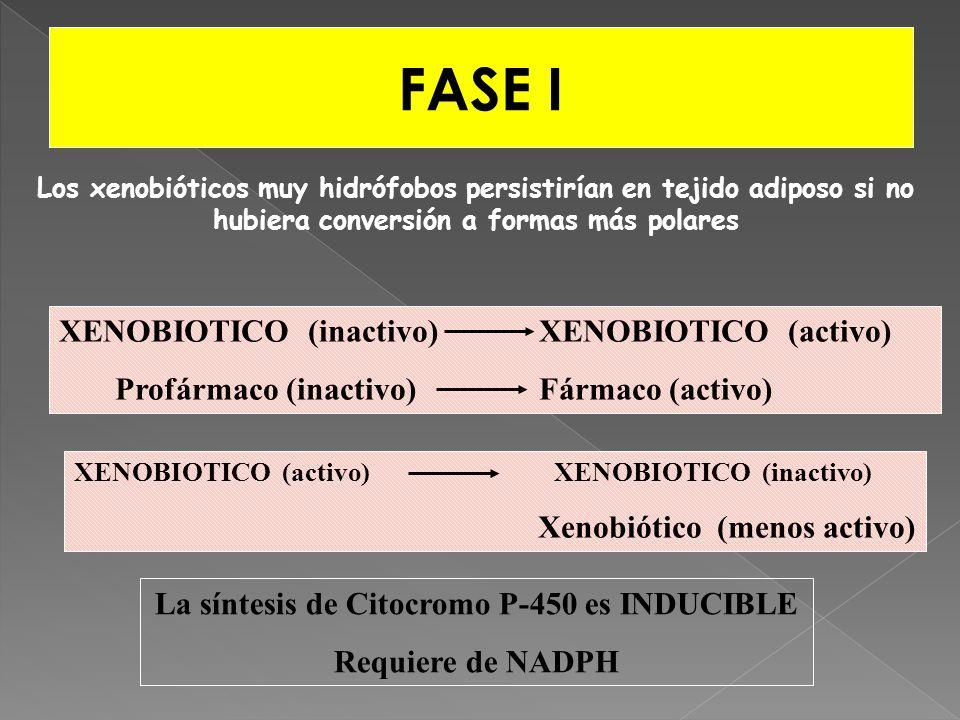 FASE I XENOBIOTICO (inactivo) XENOBIOTICO (activo) Profármaco (inactivo)Fármaco (activo) XENOBIOTICO (activo) XENOBIOTICO (inactivo) Xenobiótico (meno