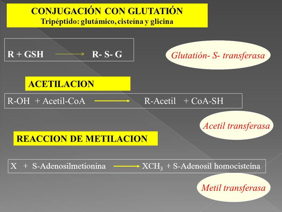ACETILACION R-OH + Acetil-CoA R-Acetil + CoA-SH CONJUGACIÓN CON GLUTATIÓN Tripéptido: glutámico, cisteína y glicina X + S-Adenosilmetionina XCH 3 + S-
