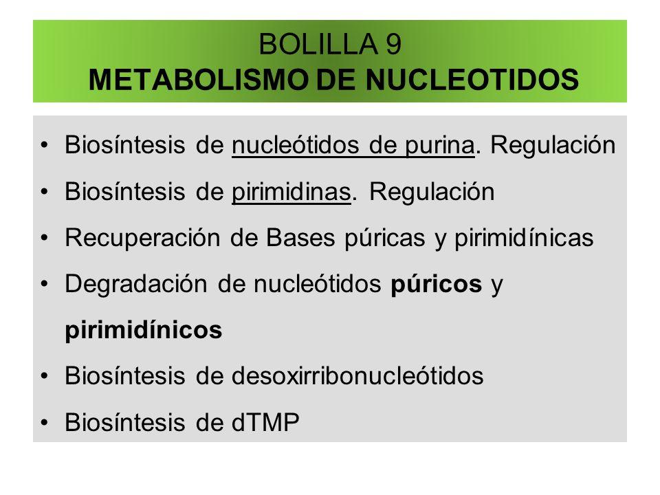 BOLILLA 9 METABOLISMO DE NUCLEOTIDOS Biosíntesis de nucleótidos de purina. Regulación Biosíntesis de pirimidinas. Regulación Recuperación de Bases púr