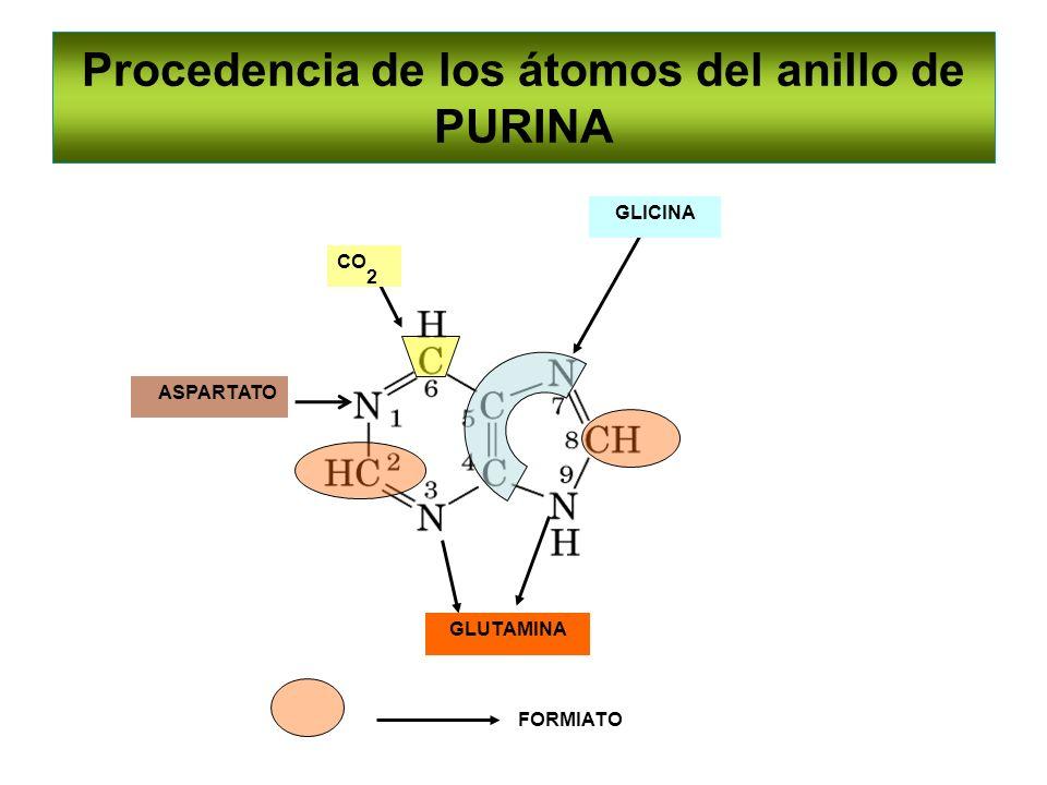 GLUTAMINA GLICINA FORMIATO ASPARTATO CO 2 Procedencia de los átomos del anillo de PURINA