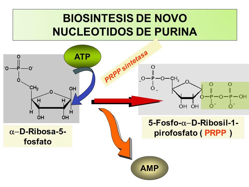 BIOSINTESIS DE NOVO NUCLEOTIDOS DE PURINA ATP D-Ribosa-5- fosfato 5-Fosfo- D-Ribosil-1- pirofosfato ( PRPP ) AMP PRPP sintetasa