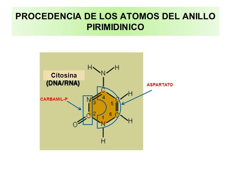 PROCEDENCIA DE LOS ATOMOS DEL ANILLO PIRIMIDINICO Citosina ASPARTATO CARBAMIL-P