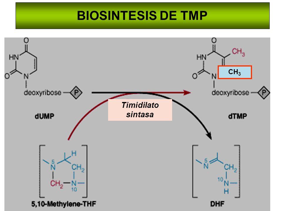 BIOSINTESIS DE TMP Timidilato sintasa CH 3