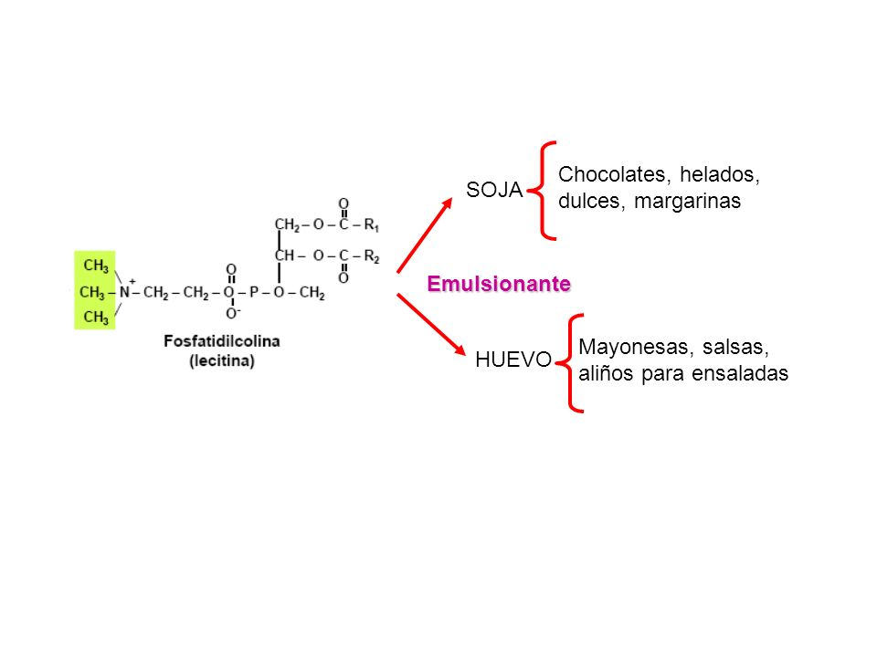 Síntesis de Fosfolípidos QUIMICA BIOLOGICA Lic.en Biol.