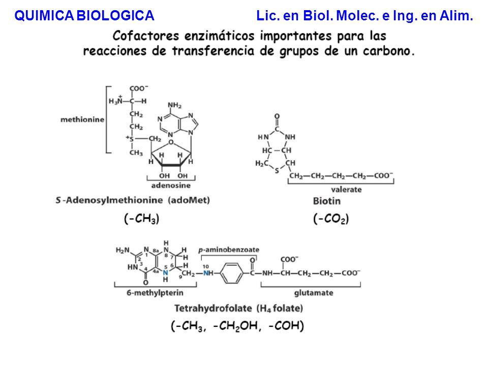 Síntesis de Fosfolípidos QUIMICA BIOLOGICA Lic. en Biol. Molec. e Ing. en Alim. Estrategia 1