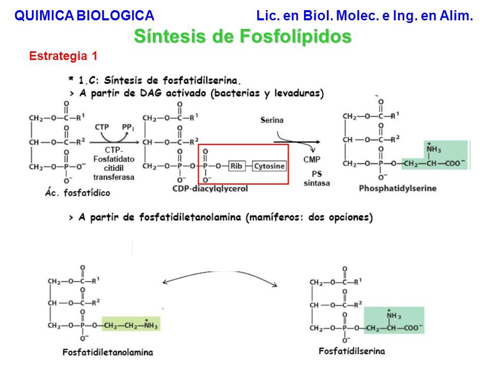 Proporción lipídica en las membranas celulares de los hepatocitos Membrana Plasmática Mitocondrial interna Mitocondrial externa Lisosomal Nuclear RE rugoso RE liso QUIMICA BIOLOGICA Lic.