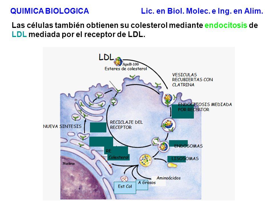 Colesterol: precursor de otros compuestos biológicos constituyente membranas biológicas: fluidez precursor de hormonas esteroidales, ács.
