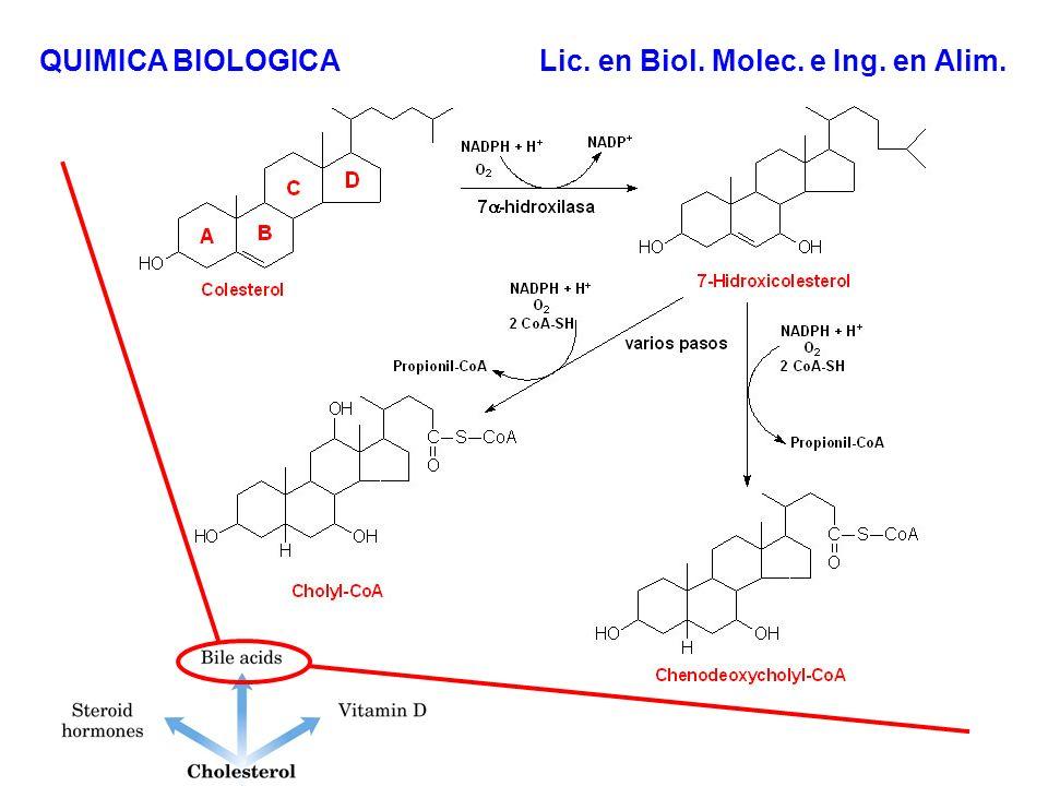 Funciones de los lípidos Fuente de reserva energética (Trigliceridos) Componentes de membranas (Fosfolipidos y colesterol) Reguladores Biológicos (hormonas esteroideas) Pigmentos (retinol, carotenos) Cofactores (vitamina K) Detergentes (ácidos biliares) Transportadores (dolicoles) Ancladores de proteínas.