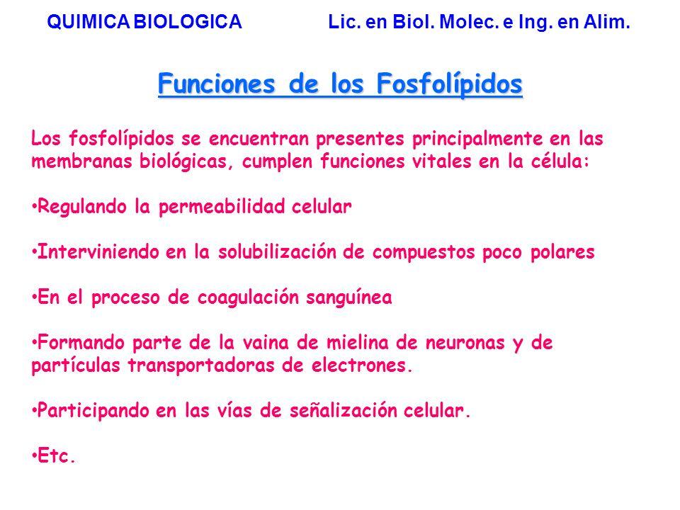 7 Las enzimas de la síntesis de FL se encuentran insertas en las membranas del RE QUIMICA BIOLOGICA Lic.