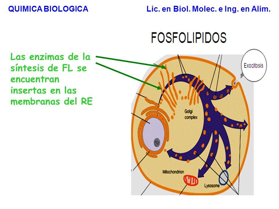 Síntesis de Fosfolípidos Estrategia 1 1,2-diacilglicerol es activado con CDP Estrategia 2 El grupo polar es activado con CDP Transferasa QUIMICA BIOLOGICA Lic.